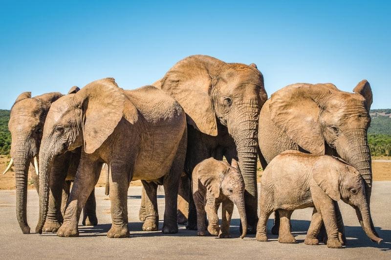 Family of elephants in Addo Elephant Park